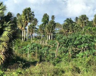 Land for 87 697 euro in Cabarete, Dominican Republic