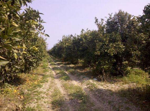 Земля в Лутраки, Греция, 200 Га - фото 1