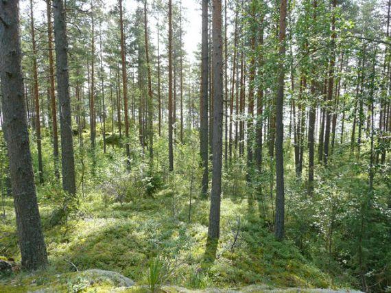 Земля в Савитайпале, Финляндия, 163900 м2 - фото 1