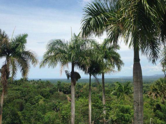 Земля в Сосуа, Доминиканская Республика, 6500 м2 - фото 1