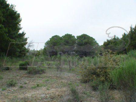 Земля на Кассандре, Греция, 300 м2 - фото 1