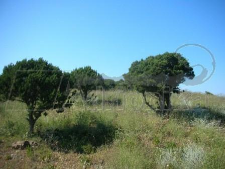 Земля на Кассандре, Греция, 400 м2 - фото 1