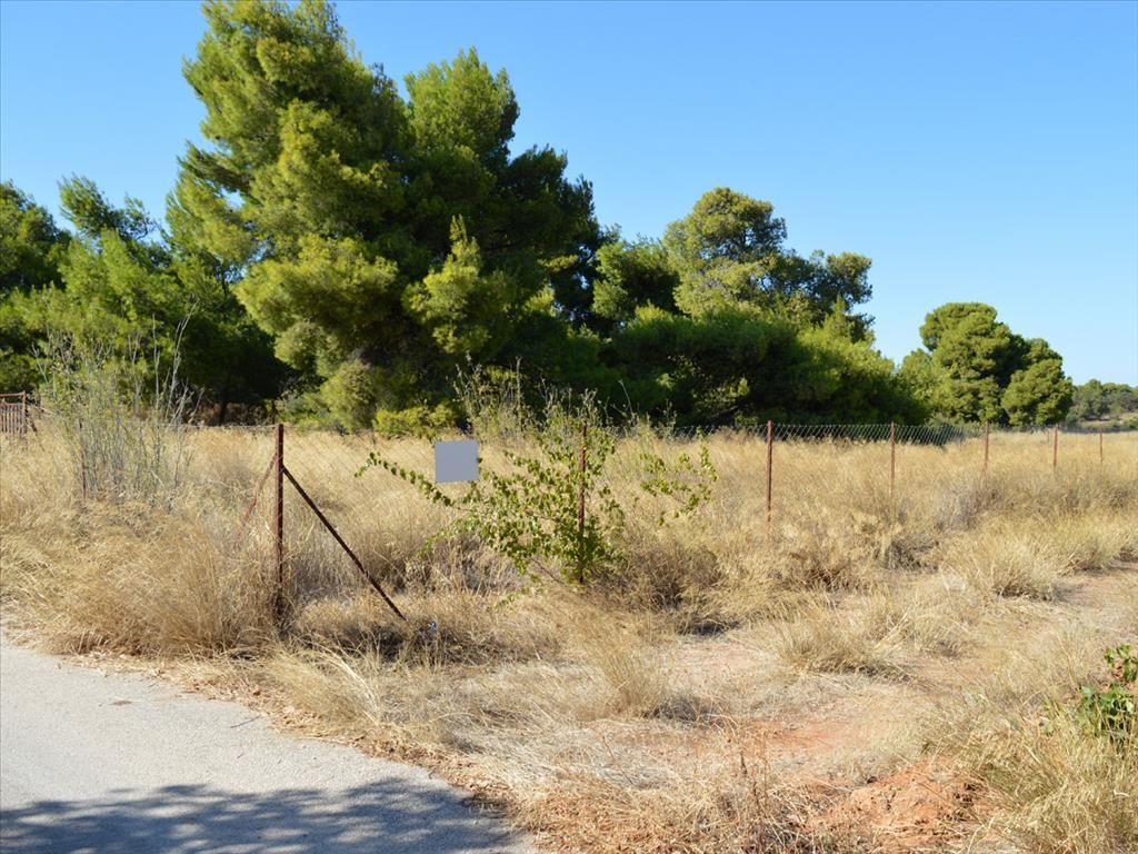 Земля в Рафине, Греция, 500 м2 - фото 1