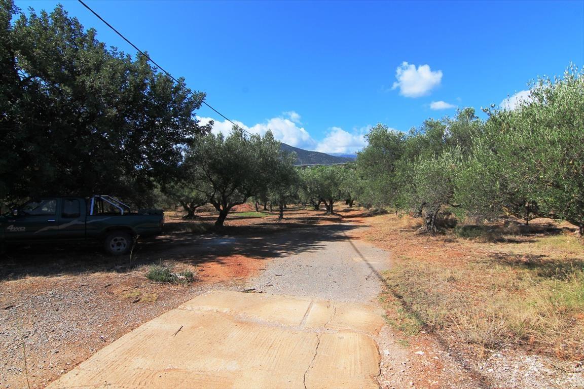 Земля в Ласити, Греция, 7800 м2 - фото 1