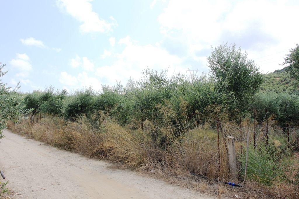 Земля в Ханье, Греция, 4100 м2 - фото 1