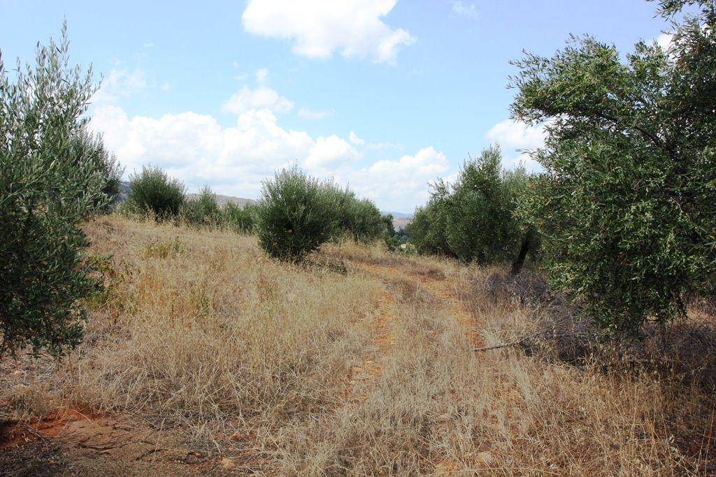 Земля в Ханье, Греция, 4300 м2 - фото 1