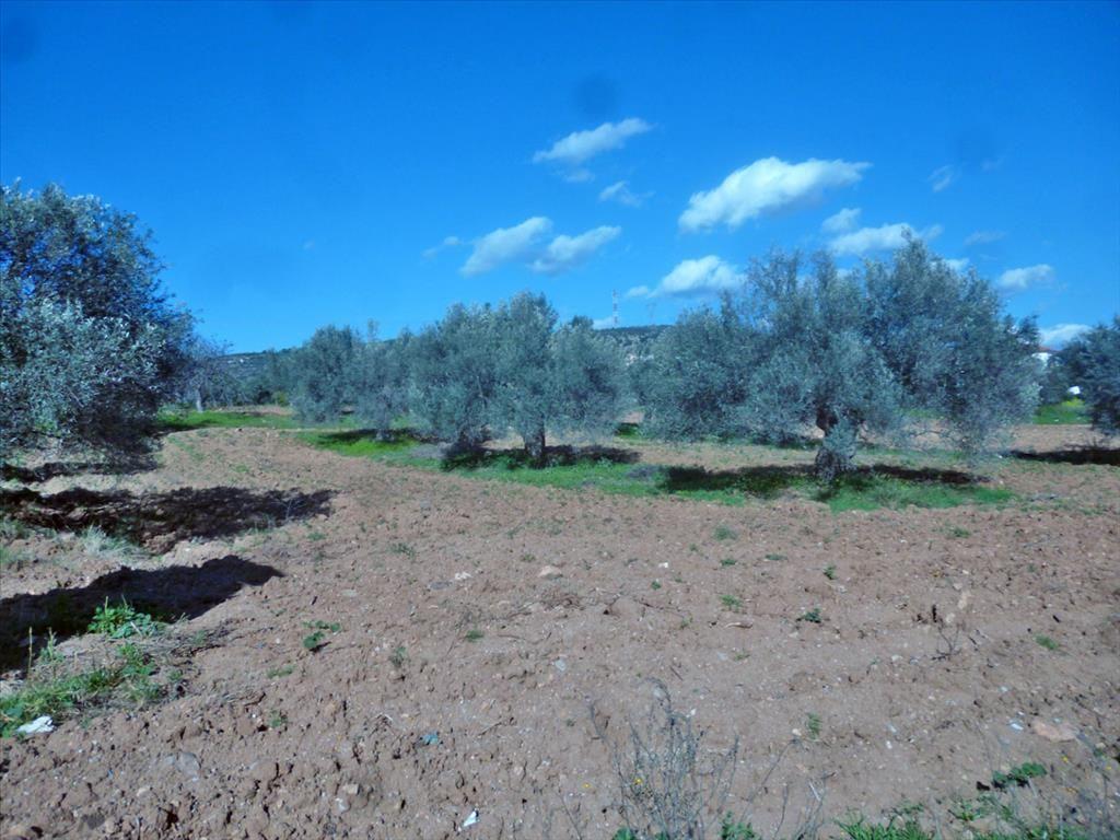 Земля в Эретрии, Греция, 3500 м2 - фото 1