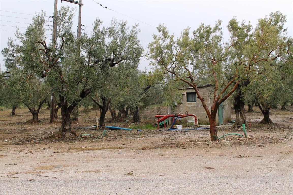 Земля в Халкидики, Греция, 5500 м2 - фото 1