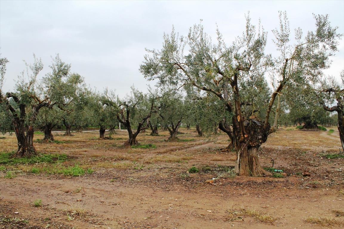 Земля в Халкидики, Греция, 1378 м2 - фото 1