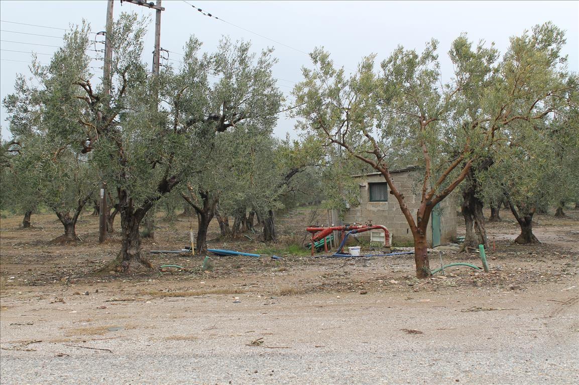 Земля в Салониках, Греция, 6200 м2 - фото 1