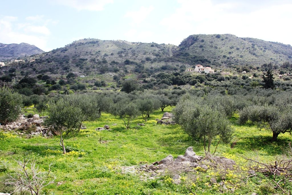 Земля в Ханье, Греция, 5000 м2 - фото 1