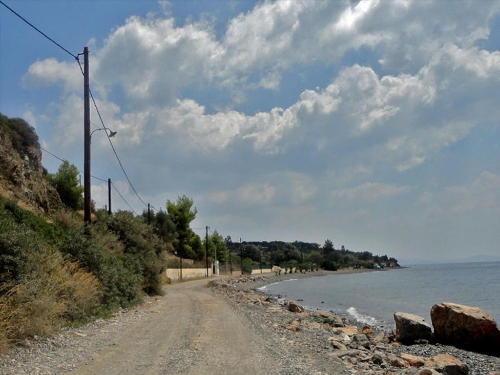 Земля на Эвбее, Греция, 6500 м2 - фото 1