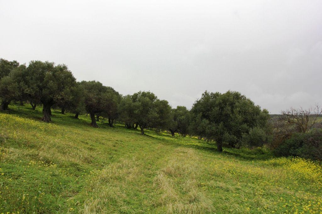Земля в номе Ираклион, Греция, 4014 м2 - фото 1