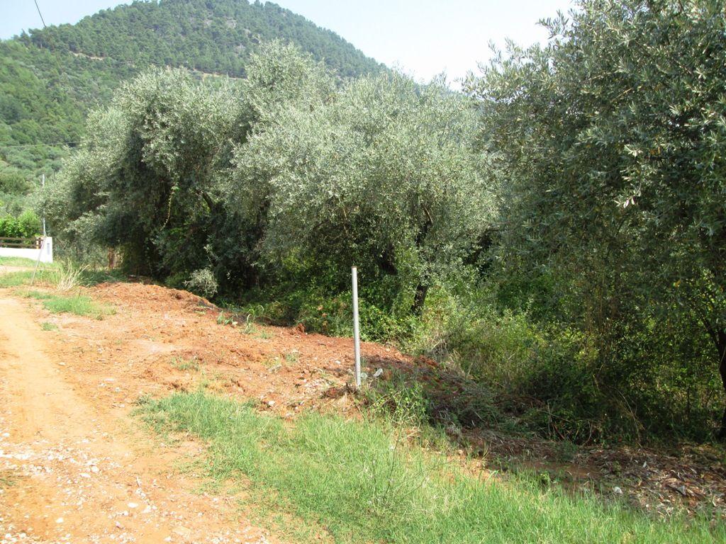 Земля на Тасосе, Греция, 195 м2 - фото 1