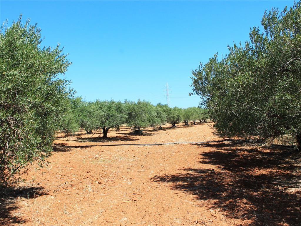 Земля в Аниссарас, Греция, 4289 м2 - фото 1