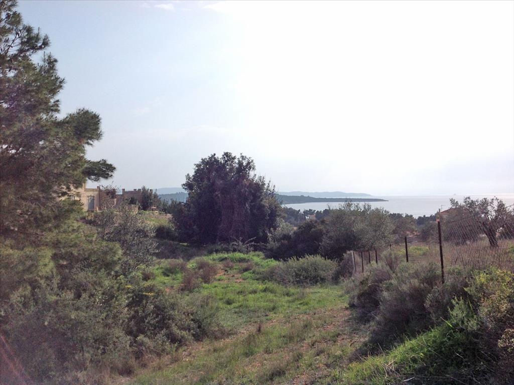 Земля в Порто-Хели, Греция, 12000 м2 - фото 1