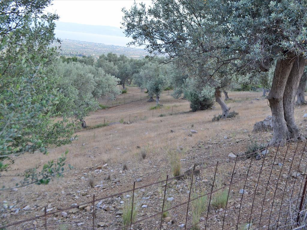 Земля на Эвбее, Греция, 680 м2 - фото 1