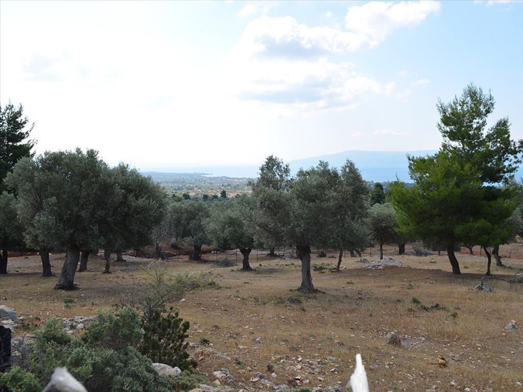 Земля в номе Ханья, Греция, 6500 м2 - фото 1