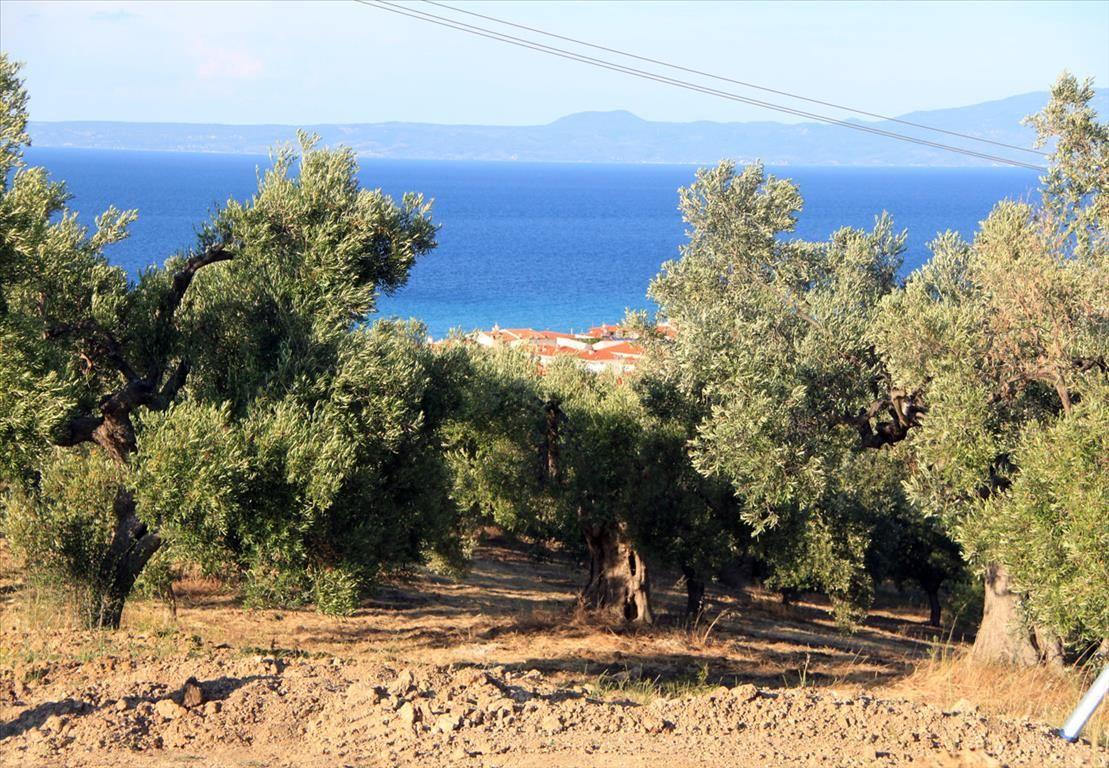 Земля на Кассандре, Греция, 500 м2 - фото 1
