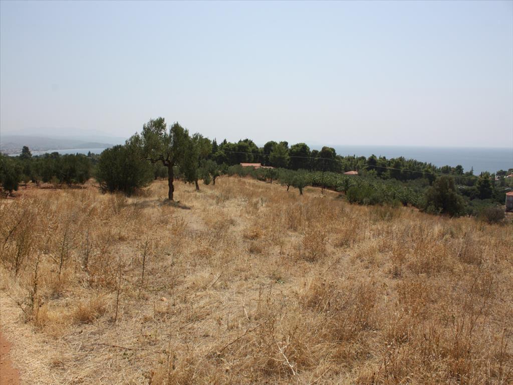 Земля в Ситонии, Греция, 7200 м2 - фото 1
