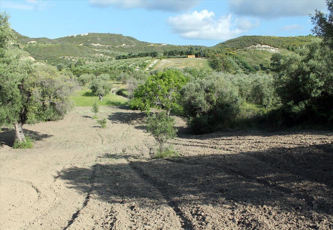 Земля на Кассандре, Греция, 5000 м2 - фото 1