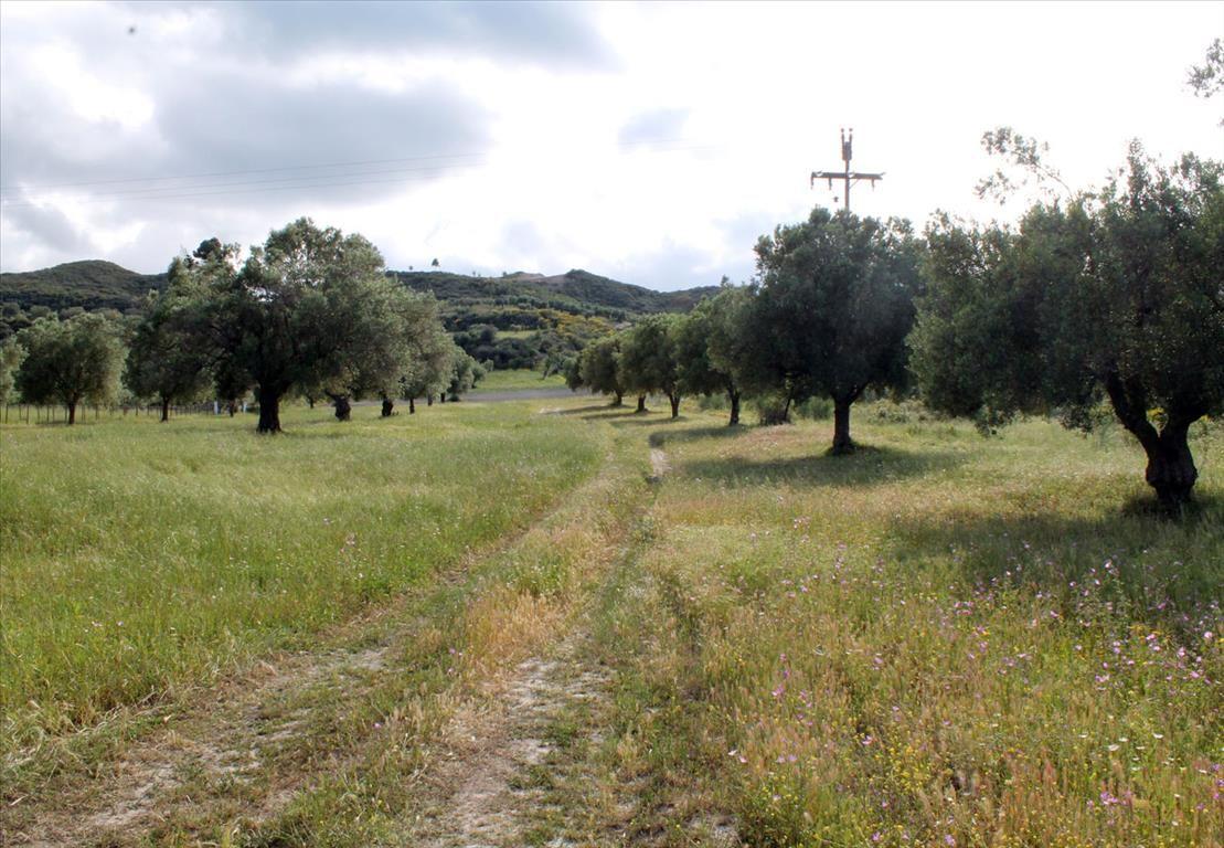 Земля на Кассандре, Греция, 5500 м2 - фото 1