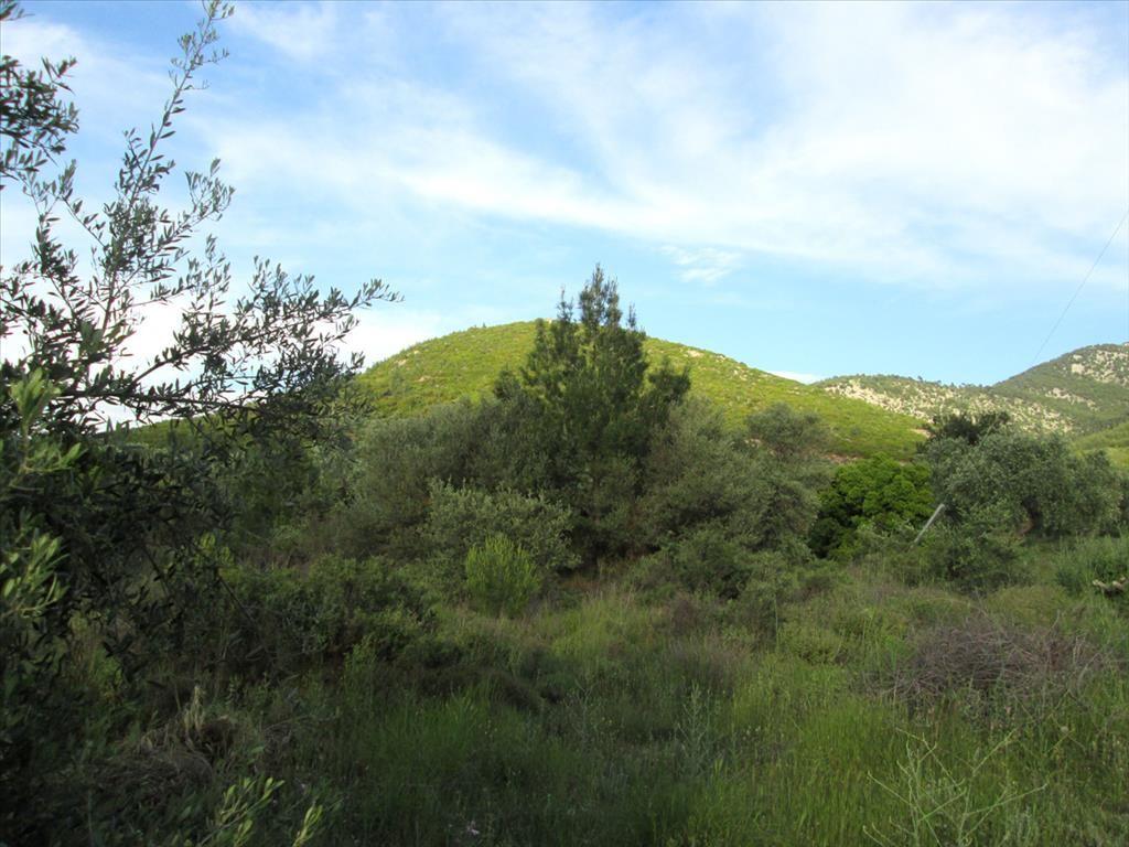 Земля на Тасосе, Греция, 1214 м2 - фото 1