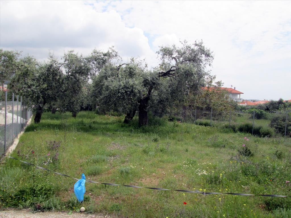 Земля на Тасосе, Греция, 400 м2 - фото 1