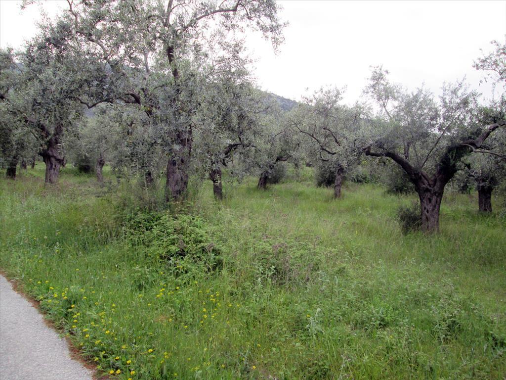 Земля на Тасосе, Греция, 1350 м2 - фото 1