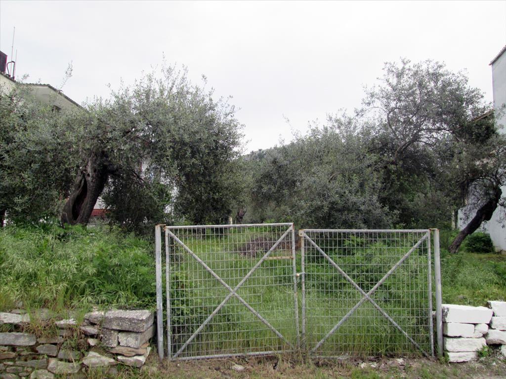 Земля на Тасосе, Греция, 1100 м2 - фото 1