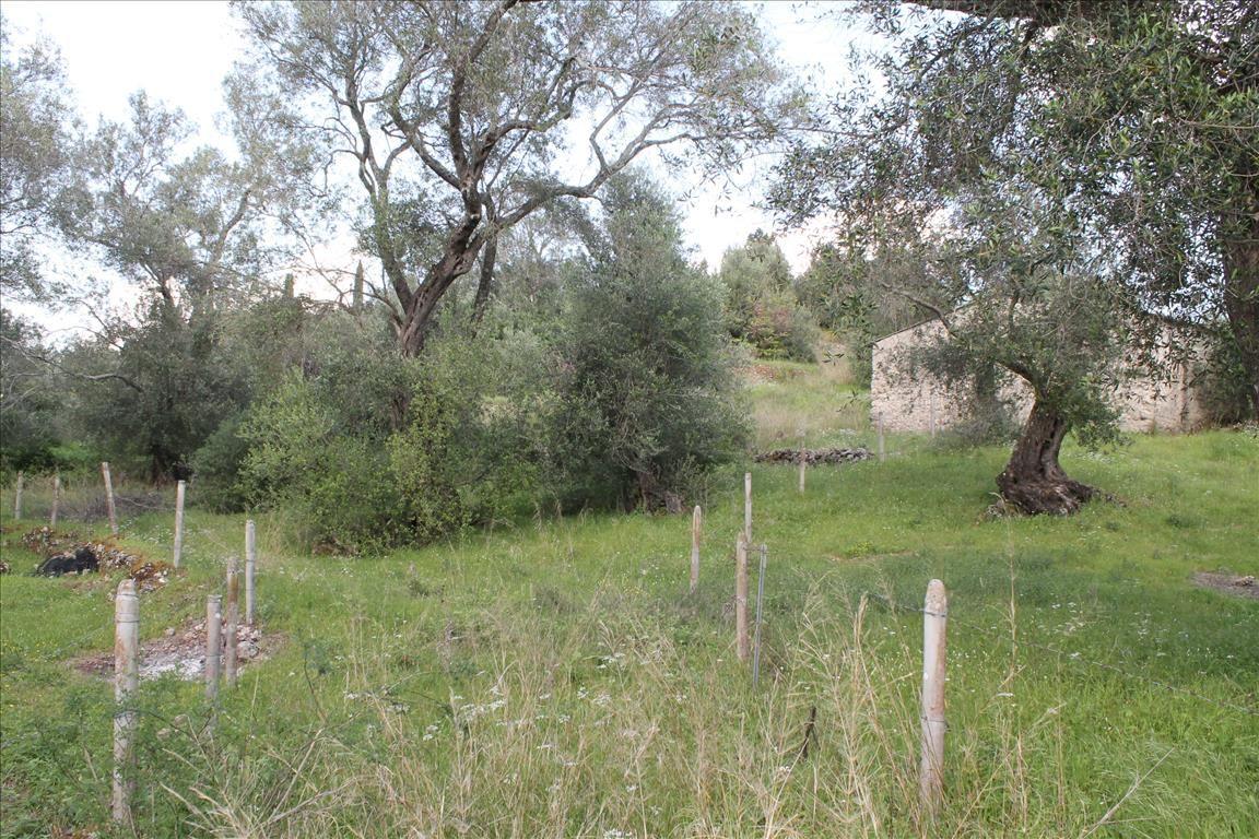 Земля на Керкире, Греция, 4300 м2 - фото 1