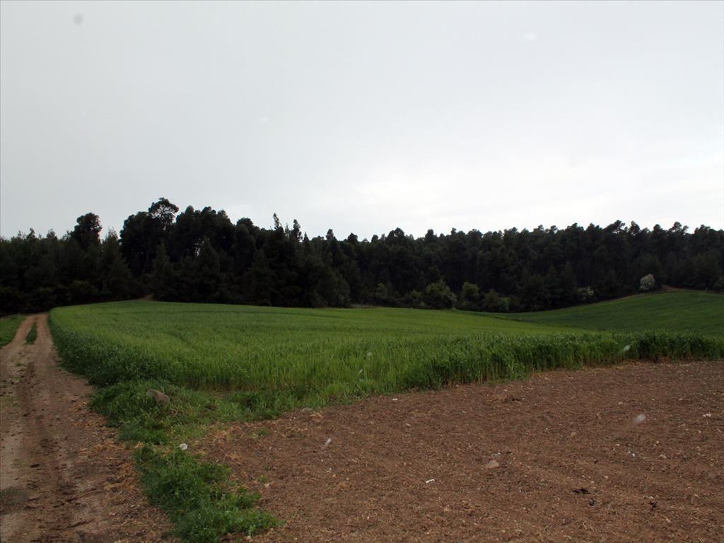 Земля в Сани, Греция, 11000 м2 - фото 1
