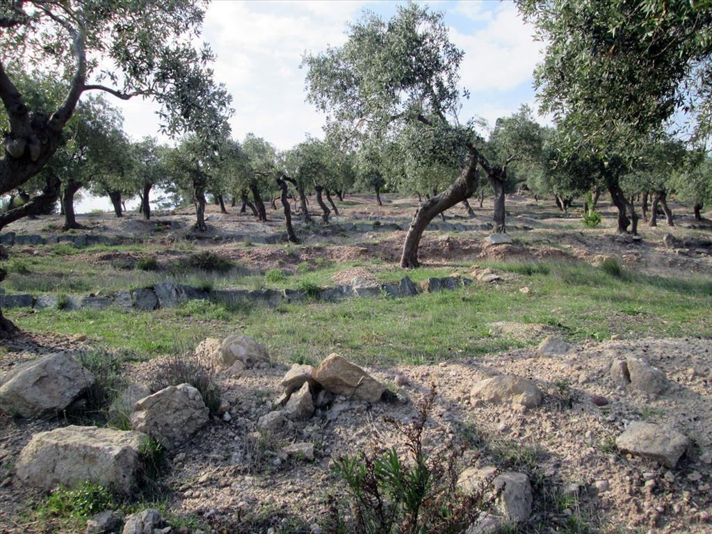 Земля на Тасосе, Греция, 12788 м2 - фото 1