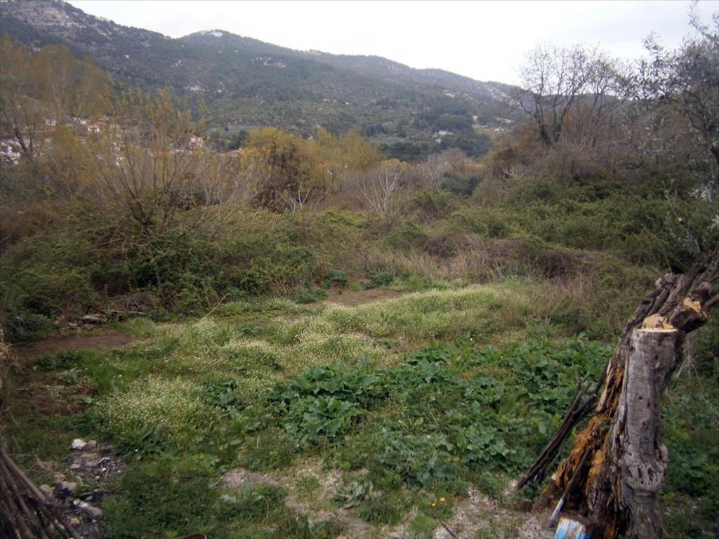Земля на Тасосе, Греция, 320 м2 - фото 1