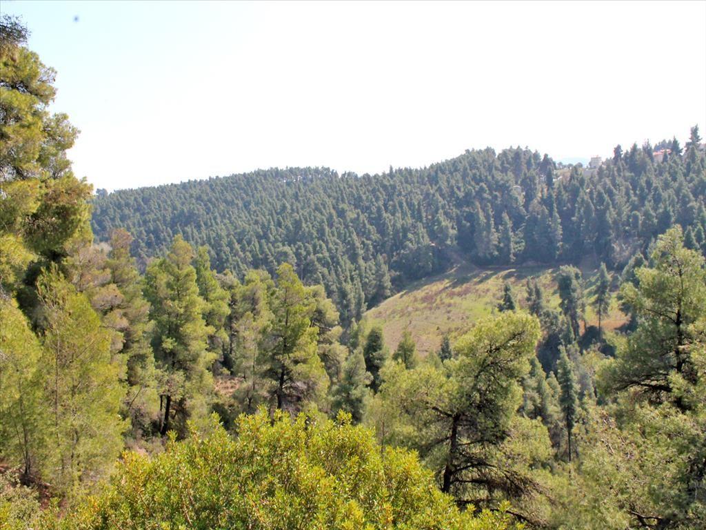 Земля в Сани, Греция, 4050 м2 - фото 1