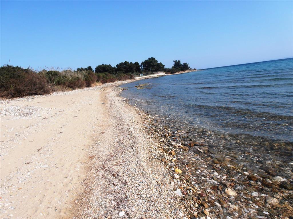 Земля в Халкидики, Греция, 5360 м2 - фото 1