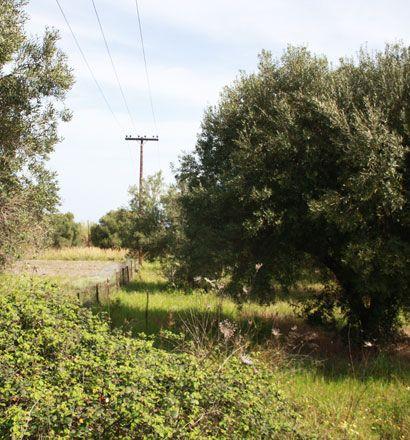 Земля на Кассандре, Греция, 460 м2 - фото 1