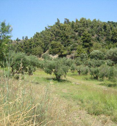 Земля на Кассандре, Греция, 16000 м2 - фото 1