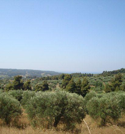Земля на Кассандре, Греция, 14500 м2 - фото 1