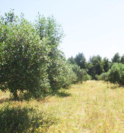 Земля в номе Ханья, Греция, 18000 м2 - фото 1