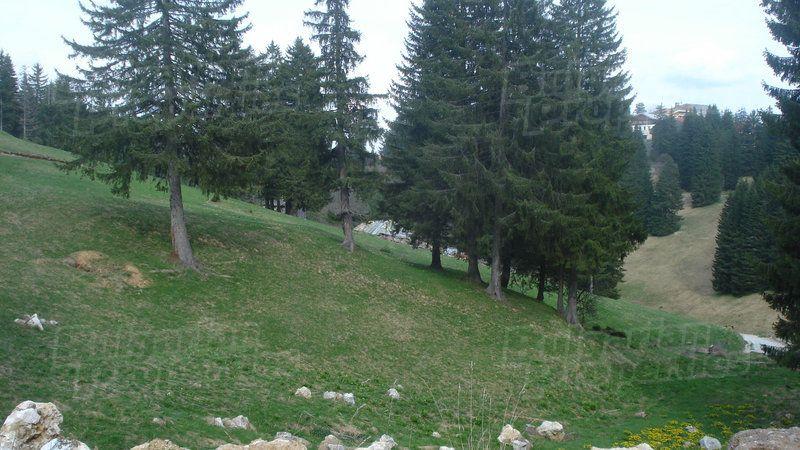 Земля в Пампорово, Болгария - фото 1