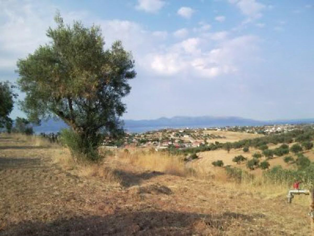 Земля Халкусти, Греция, 4500 м2 - фото 1