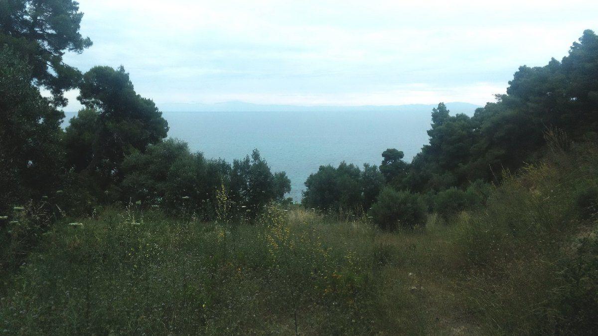 Земля на Кассандре, Греция, 4500 м2 - фото 1