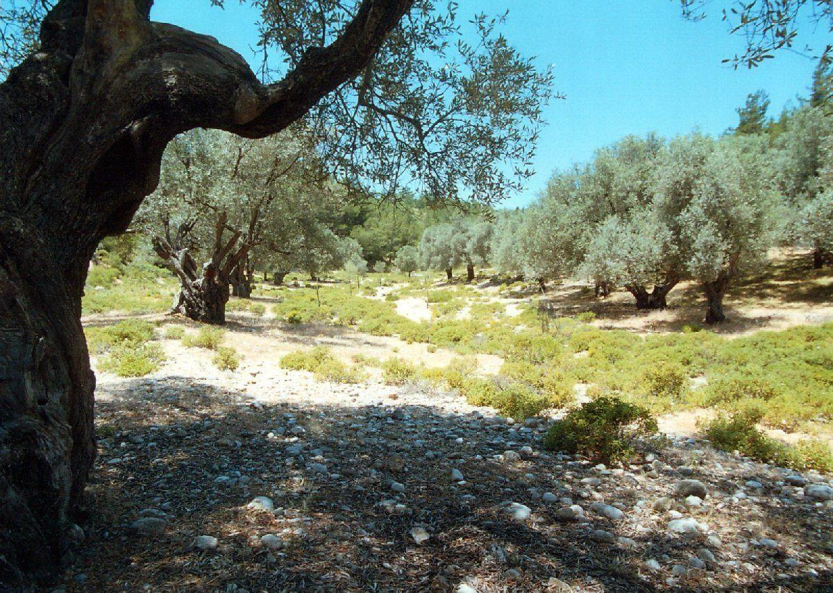 Земля на Родосе, Греция, 44000 м2 - фото 1