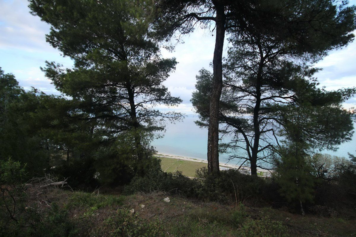 Земля на Кассандре, Греция, 4900 м2 - фото 1