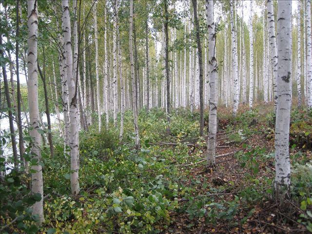 Земля в Сауконсаари, Финляндия, 5000 м2 - фото 1