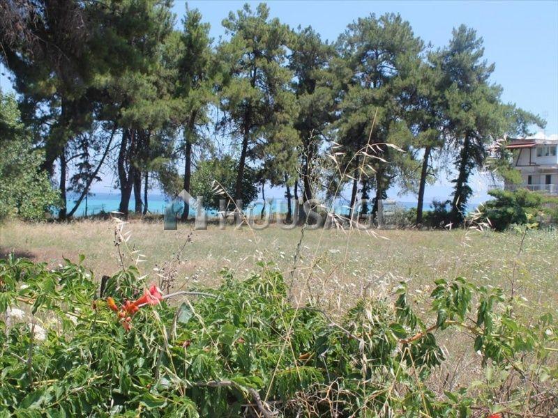 Земля на Кассандре, Греция, 3600 м2 - фото 1