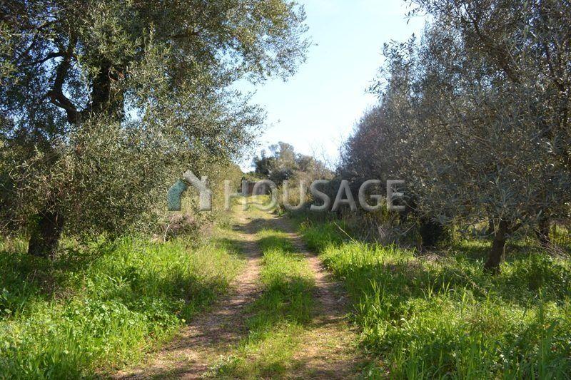 Земля на Керкире, Греция, 24000 м2 - фото 1