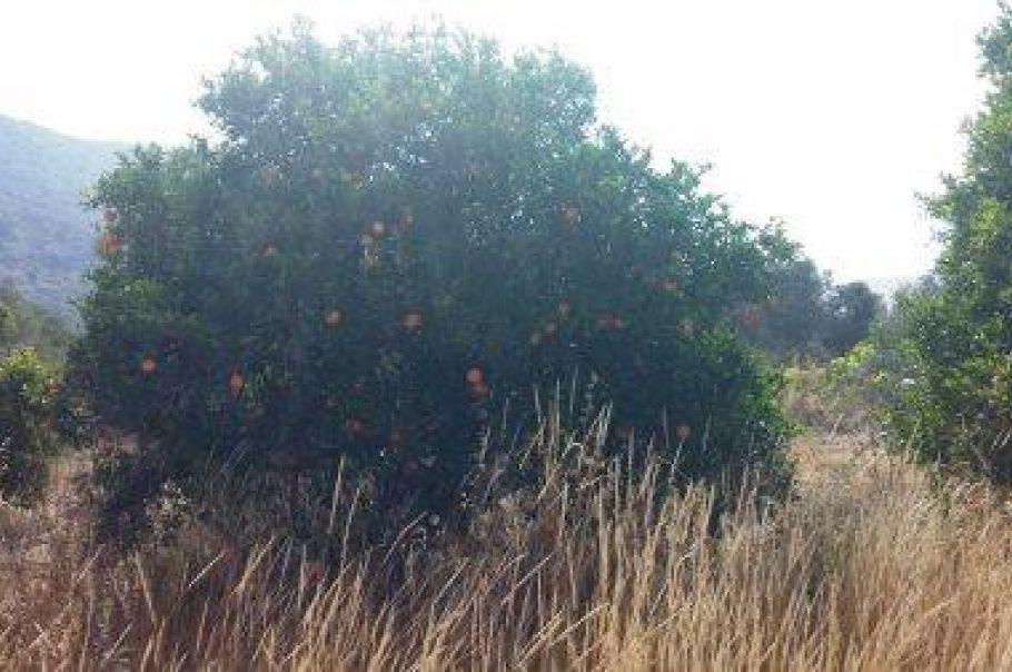 Земля в Ларнаке, Кипр, 5.686 м2 - фото 1