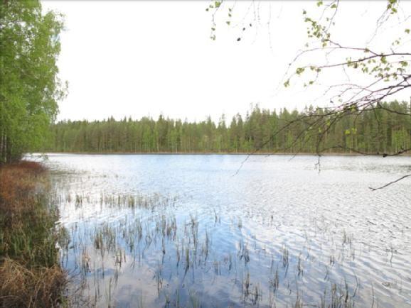 Земля в Юва, Финляндия, 10000 м2 - фото 1